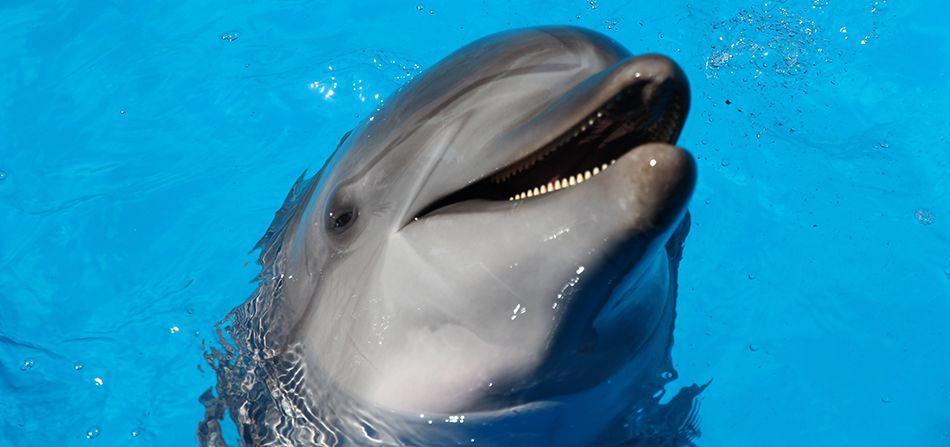 Dolphin Joke.jpg