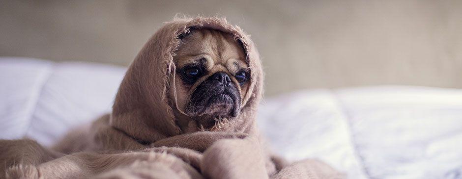 Puppy LLC.jpg