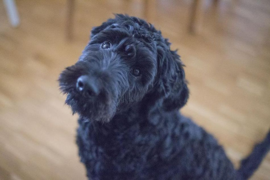 black-puppy_WR0AOMZ11V.jpg