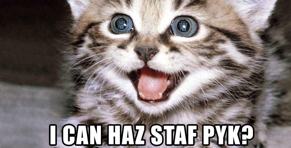 Staff Pick Cat.jpg